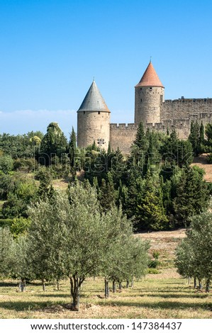 olive tree field with the ancient city towers of Carcassonne on the background, south of France