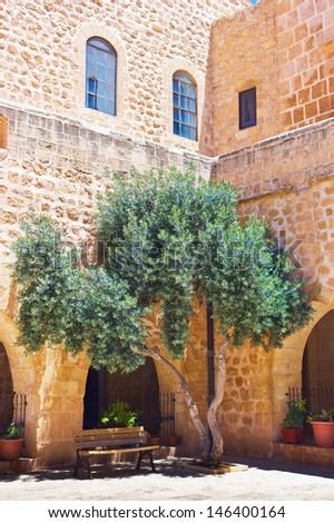 Olive tree in courtyard - stock photo