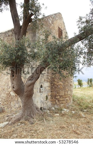 Olive tree in front of old Greek monastery, - stock photo