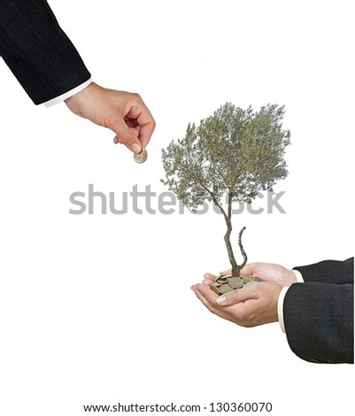 Olive tree in palm as a gift