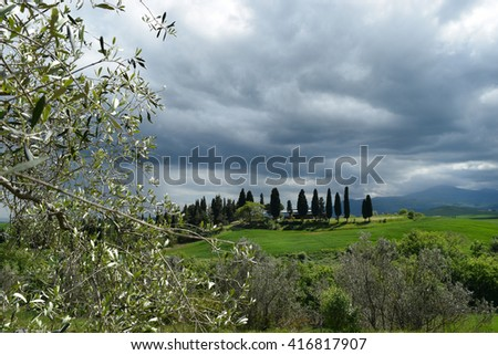 olive tree in the background with  fields and cypress trees in Tuscany and a dramatic sky