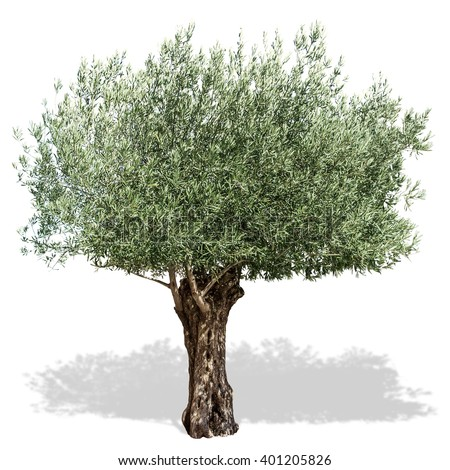 how to create olive green pictures on photoshop
