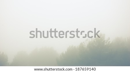 Olive tree twigs in the fog. Mistral wind blows in Provence (France). Blur. Aged photo. - stock photo