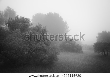 Olive Trees in a fog. Mistral wind blows in Provence (France). Aged photo. Black and white. - stock photo