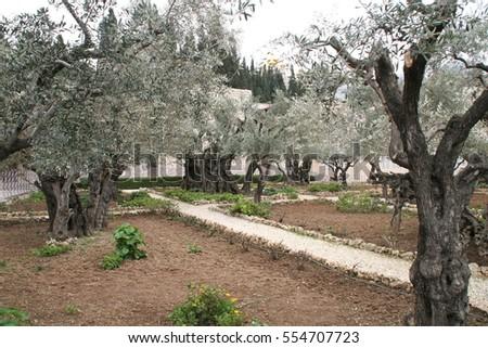 Jesus Praying Garden Stock Images Royalty Free Images Vectors Shutterstock