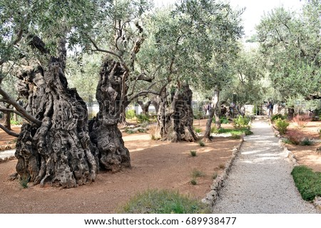 Gethsemane Stock Images Royalty Free Images Vectors Shutterstock