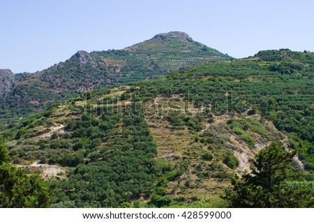 Olive tress on Crete - Greece - stock photo