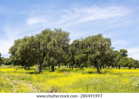 Olives in flowery field in Spring