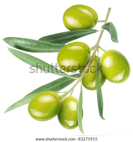 Olives on branch with leaves isolated on white. File contains a path to cut. - stock photo