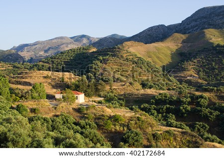 Olives plantation in the mountains of Crete - Greece - stock photo