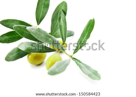 Olives with leaves on branch isolated on a white background