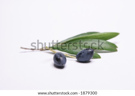 Olives with olive leaves on white background