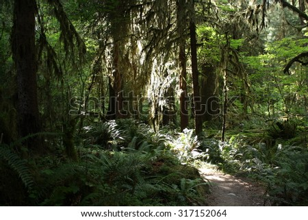 Olympic National Forest Wilderness and Rain Forest