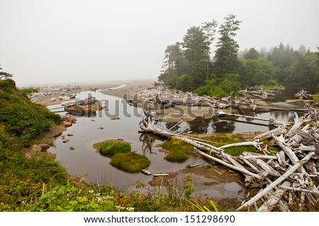 Olympic National Park near Kalaloch, Washington - stock photo