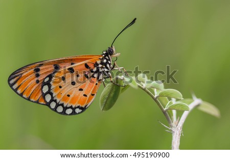 OLYMPUS DIGITAL CAMERA orange butterfly