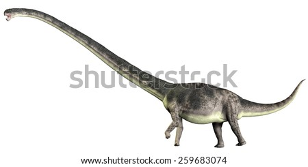 Omeisaurus on White - Omeisaurus is a herbivorous sauropod dinosaur that lived in the Jurassic Period of China. - stock photo