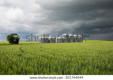 Ominous storm clouds behind a wheat field & grain silos in Alberta, Canada