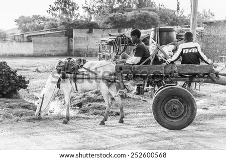 OMO, ETHIOPIA - SEPTEMBER 19, 2011: Unidentified Ethiopian boys on a horse carriage. People in Ethiopia suffer of poverty due to the unstable situation