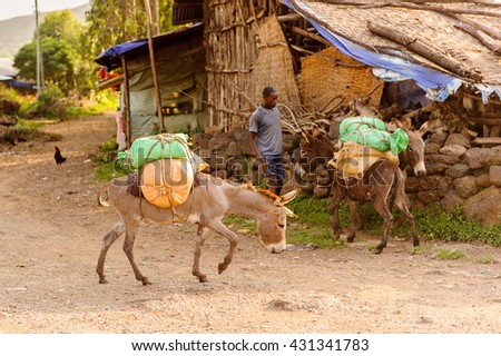 OMO, ETHIOPIA - SEPTEMBER 19, 2011: Unidentified Ethiopian man with donkeys. People in Ethiopia suffer of poverty due to the unstable situation
