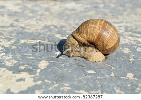 On a concrete slab large snail crawling, side view
