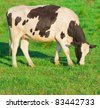 On a meadow Cows Animals - stock photo