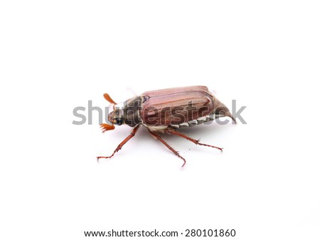 On a photo chafer isolated on white