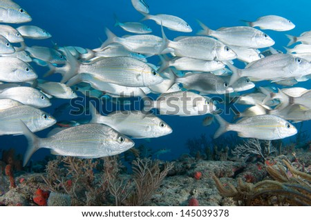On a sixty foot reef in South Florida - stock photo
