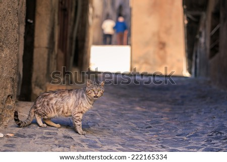 On a street of a antique italian village, a cat lets itself be photographed without worry - stock photo