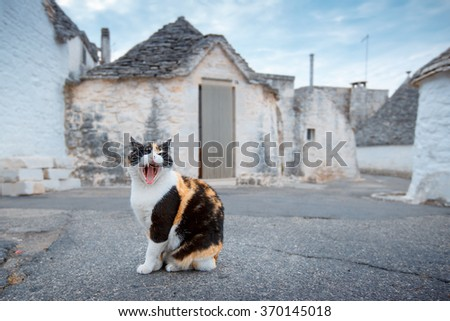 On a street of an antique italian village, a cat lets itself be photographed without worry, Alberobello, Italy