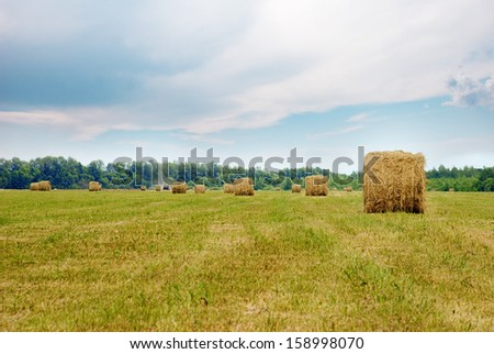 On a summer field tractor harvesting hay and packs it into rolls - stock photo