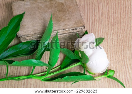On a surface of a table there are a beautiful white flower of a peony and the ancient book.