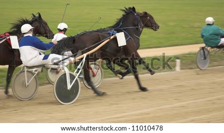 on horse race - stock photo