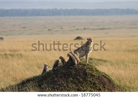 On Safari in the Masai Mara game reserve Kenya Africa - stock photo
