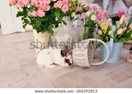 on the floor under large vases with flowers sitting rabbit