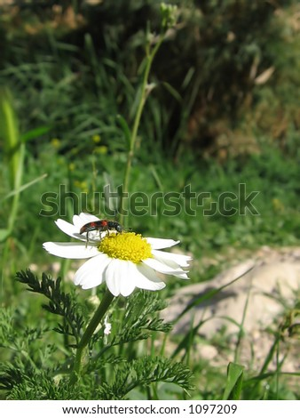 on the flower - stock photo