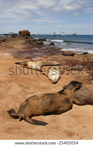 On the seal beach Galapagos