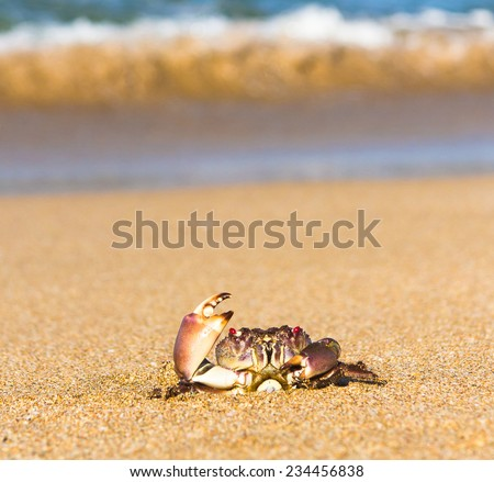 On the Shore Seafood Posing  - stock photo