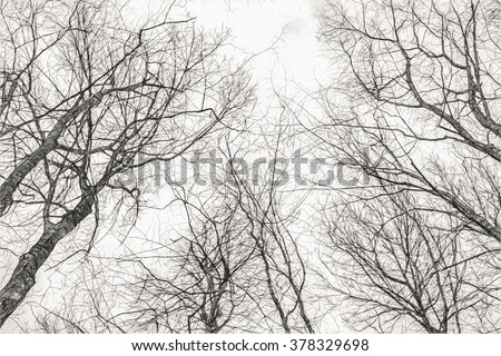 On the sky through the branches - Pencil sketch digital illustration art work. - stock photo