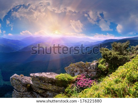 On the tops of the Carpathians in the late spring, early summer bloom beautiful alpine flowers, rhododendrons. This time, spring break-favorite for alpine trips in the Carpathians, Ukraine. - stock photo