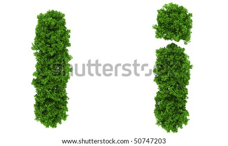 on top view tree  forest  high detail font - stock photo