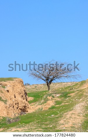 One bare tree in a winter desert  under blue sky - stock photo