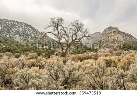 One beautiful, large, bare tree stands in the middle of sagebrush, evergreens, mountains, and a moody sky