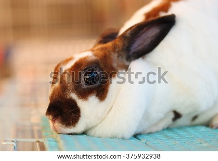 one Beautiful white brown color Cute sweet Little Easter Bunny rabbit on soft cloth laying on a cage in pet shop outdoor - stock photo