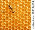 One bee works on honeycomb - stock photo