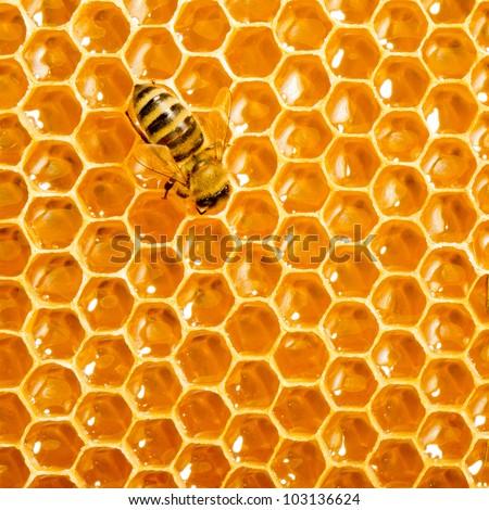 One bee works on honeycomb - stock photo