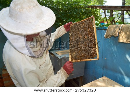 One beekeeper checks frame with worker bees on honeycomb                                - stock photo