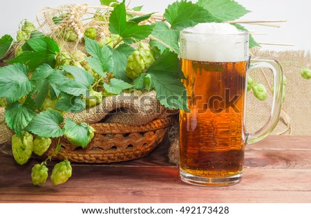 One beer glassware with beer, branches of hops with leaves and cones and spikes of barley and wheat on a dark wooden surface