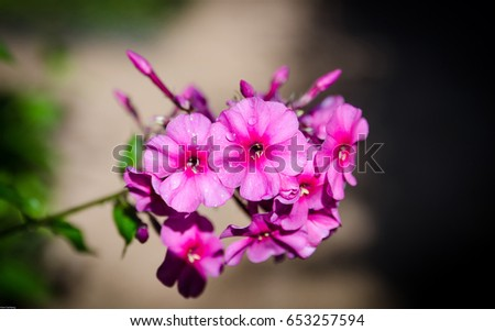 Beutiful beutiful stock images, royalty-free images & vectors | shutterstock
