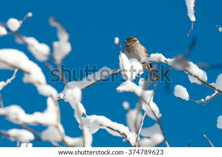 One bird in a tree covered in snow with blue sky in background.