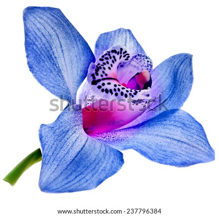 One blue orchid bud close up isolated on white - stock photo